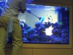 Реклама для услуг очистки аквариумов