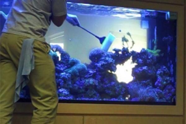 3.чистка аквариумов